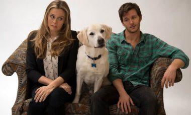 """Filme """"Um Cachorro Para Dois"""" / Foto: Reprodução"""