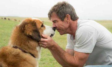 Prepare os lenços: Sessão da Tarde exibe Quatro vidas de um cachorro nesta quarta (16/10)
