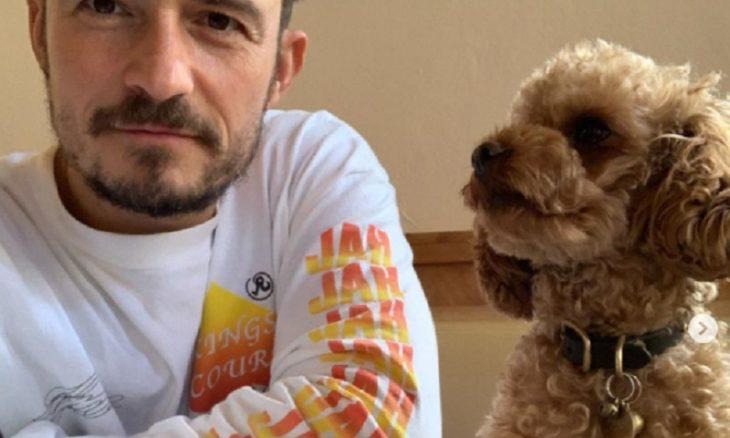 Orlando Bloom lamenta a morte de seu cachorro desaparecido